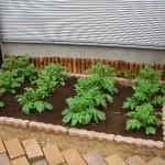 家庭菜園での種まき?苗選び?苗植え?