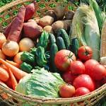 家庭菜園で作る無農薬野菜?ベランダに向いた野菜?
