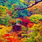 奈良の紅葉2015見頃の時期!お勧めスポット♪