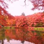 軽井沢(雲場池)紅葉 2015 見頃時期?周辺の紅葉スポット?
