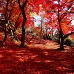 尾関山公園 紅葉 2015見頃時期?アクセスはどうなの!