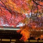 鎌倉の紅葉2015!名所の見頃時期と穴場スポット♪