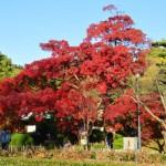 杜々の森名水公園 紅葉 2015 見頃時期?周辺の紅葉スポット?
